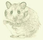 Zur Zeit wohnt leider kein Hamster bei uns!