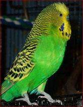 normal, dunkelgrün (Sunny)