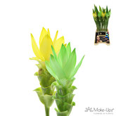 Mix yellow-green