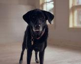 Quel avenir pour le chien ?