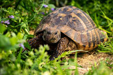 S - wie Schildkröte