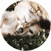 assurance chien chat animal animaux compagnie ensemble calin dort dormir cute cat dog comparatif comparaison prix pas chère herbe devis gratuit