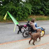 Liegedreiradfahren mit mehreren Hunden