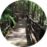 australien-noosa-nationalpark