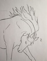 Horse Bucking, line drawing by Sarah Myers