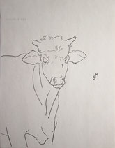 Young Steer Staring, line drawing by Sarah Myers