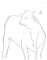 Young Steer, line drawing by Sarah Myers