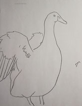 Duck Lifting its Wings, line drawing by Sarah Myers