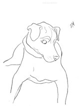 Dog Looking Down, line drawing by Sarah Myers