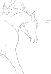 Horse with Flying Mane, line drawing by Sarah Myers