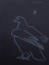 Pigeon Raising its Wings, line drawing by Sarah Myers