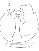 The Swan, line drawing by Sarah Myers