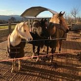 HellerHof Gelfingen: Pferdepension und Altersweiden