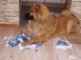 Bia freut sich übers Weihnachtspapier