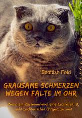 Scottish Fold: Wenn ein Rassemerkmal eine Krankheit ist, geht züchterischer Ehrgeiz zu weit