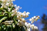 自然公園の花あふれる里山 みのかも健康の森へ。美濃加茂けんこうの森は美濃加茂市山之上にあります。可児市関市美濃市東濃地方中濃地方の皆様、ウォーキングやハイキングを家族友人とどうぞ。
