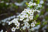 美濃加茂けんこうの森は美濃加茂市やまのうえにあります。オトコエシが咲くみのかも健康の森。