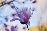 花が咲き誇り、バーベキューで家族や友人と。自然あふれる公園 美濃加茂けんこうの森へ。