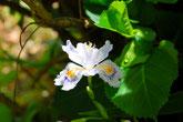 サギソウやあじさいが咲き、バーベキューで家族や友人と楽しめます。