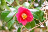 ツバキやあじさいが咲き、バーベキューで家族や友人と楽しく。里山公園 美濃加茂けんこうの森へ。