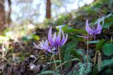 カタクリが咲き、焼肉で家族や友人と楽しく。里山公園 みのかも健康の森へ。美濃加茂けんこうの森は美濃加茂市やまのうえにあります。