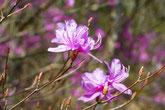 ヤマツツジやあじさいが咲き、バーベキューで家族や友人と楽しく。