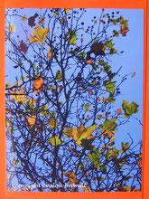 leuchtender Blätterbaum