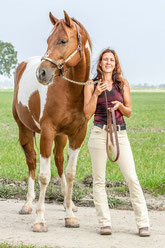 Fotovorlage Paint Horse für das Gemälde (Foto: Daniela Labella)