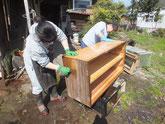 夫婦桐たんすの本体と引出を荒洗いと洗剤洗いをして砥の粉ヤシャを落とします。