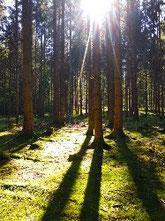 Walk and Talk, Coaching von Vita Consulting Jasmin Ottitsch, psychologische Beratung, Salzburg, Natur, Psychologin