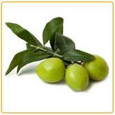 prodotti cosmetici naturali olio di oliva