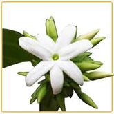 prodotti cosmetici naturali al gelsomino bio