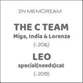 mi-miga-about-us-in-memoriam-the-c-team-miga-india-lorenza-leo-special-needs-cat