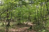 夏の四季の森