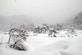 雪に覆われた湿原
