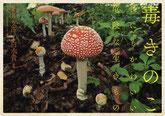 『毒きのこ 世にもかわいい危険な生きもの』(幻冬舎)毒きのこの写真集