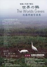 世界の鶴 佐藤照雄写真展