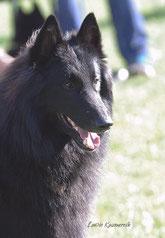 Black Bandit z Kovárny