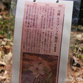 京都府立植物園より(2016年の記事)