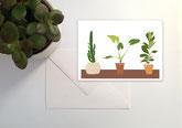 N°36 plantes vertes