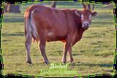 Biohof Landgut Löbbeke | Mein BioRind