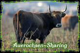 Auerochsen-Sharing