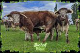 Biohof Wilke | Mein BioRind