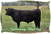 Galloway-Sharing