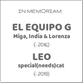 in-memoriam-el-equipo-g-miga-india-lorenza-leo-special-needs-cat