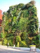 Jardín vertical del Caixa Forum