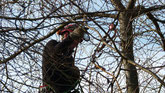 Baumpflege  Biberach an der Riss