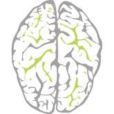 NeuroScanBalance und Neurologie - Gehirn