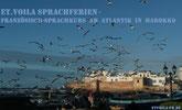 Valentin 2021 in Marokko am Atlantik . Französisch-Sprachkurs in Essaouira