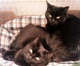 Zwei schwarze Katzen auf einem Kuschelpolster